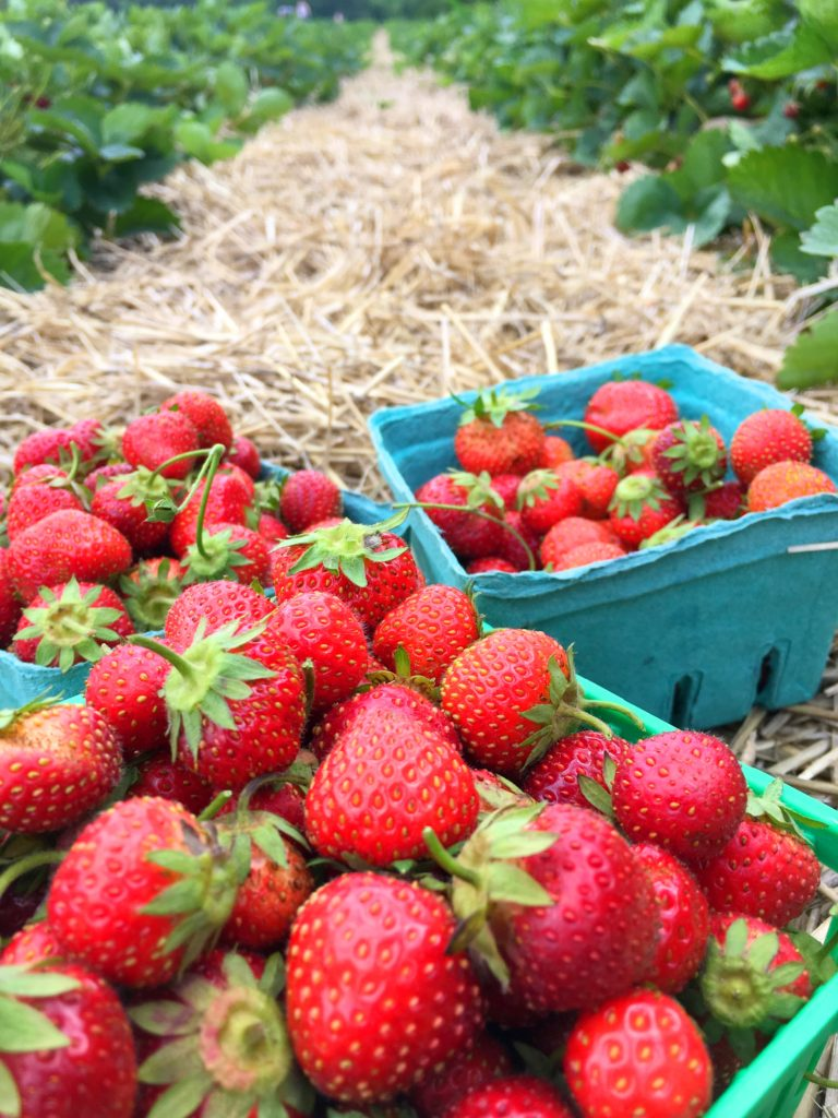 Fresh hand-picked strawberries